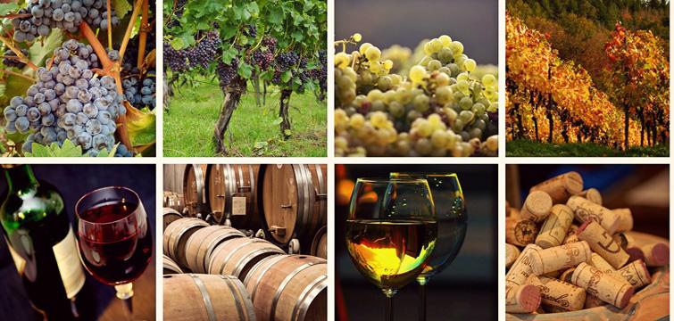 Castelli Romani Degustazione Vino